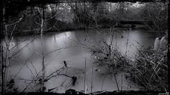 L'eau n'oublie pas son chemin. (Un jour en France) Tags: canoneos6dmarkii canonef1635mmf28liiusm rivière pont monochrome noiretblanc noiretblancfrance black