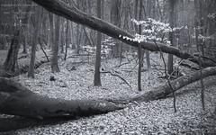 Photo of West Woods of Ethie: Depth 2