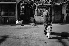 Street (1668)A611 (soyokazeojisan) Tags: japan osaka city street people dog cat bw blackandwhite monochrome analog canon canonp 28mm film trix kodak memories 1970s
