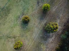 Patterns and trails (Paul Threlfall) Tags: royalpark djimavicproplatinum aerial drone trees green park melbourne victoria australia