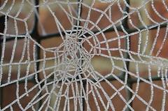 Frozen  Spider web (markbanks865) Tags: frozen spiderwebmacro silk nature gate