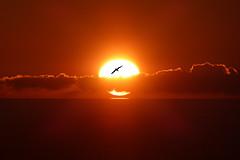 balcorama all'alba (fotomie2009) Tags: balcorama sun sole alba dawn clouds nuvole sunrise sea mare orange sunbeams raggi seagull gabbiano 90