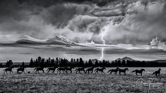 Riders on the Storm (Thüncher Photography) Tags: scenic landscape nature outdoors sky clouds storm lightning horses ranch farm monochrome blackandwhite bw mountains bend oregon centraloregon highdesert fineartphotography