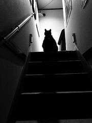 Yuba's Shadow and Silhouette (sjrankin) Tags: japan hokkaido kitahiroshima grayscale silhouette shadow stairs yuba cat animal edited 11january2020
