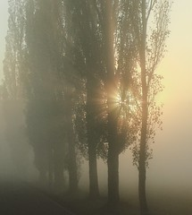 Sunrise in fog (romizaj) Tags: photo photography sunrise sun sunny rise shine fog foggy poplar polartree tree nature landscape natural emvironment ecology eco bright atumn fall fantasy magic way alley alleytree wallpaper background m100 eos canon canoneosm100