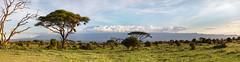 Amboseli (Dr DAD (Daniel A D'Auria MD)) Tags: panorama landscape amboseli kenya kilimanjaro danieldauria drdadbooks november2019