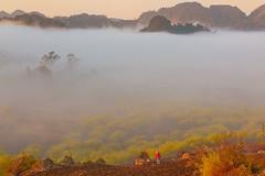 _MG_8261.0212.Tân Lập.Mộc Châu.Sơn La (hoanglongphoto) Tags: fog foggy thickgloom misty haze mists mist thickfog hoanglongphoto canoneos5dmarkii mộcchâu sơnla vietnam việtnam northvietnam northernvietnam vietnamlandscape scenery vietnamscenery mocchau landscape morning nature asia asian northwestvietnam naturelandscape mocchaulandscape sky vietnammountainouslandscape forest theforest earlyfrost earlymorningfog fogofmocchau sươngmùmộcchâu tâybắc tânlập sươngmù núi mountain phongcảnhthiênnhiên canonef24105mmf4lisusm sươngsớmmộcchâu people landscapeandpeople người phongcảnhcóngười sunshine sunny morningsunshine buổisáng nắng nắngsớm plumblossom hoamận hoamậnmộcchâu đồihoamận earlysunshine minimalisme tốigiản