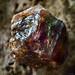 Zircon Crystal Macro