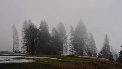 Toggenburg (Bergwandern Alpen) Tags: obertoggenburg toggenburg baum tree nebel fog mist zaun fence zwilicht twilight