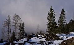 Toggenburg (Bergwandern Alpen) Tags: toggenburg nebel fog mist baum tree düster gloomy