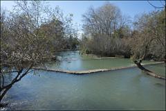 Banias Reserve 2020-01-11 IZE-146