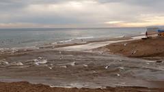 L'Estany (3) (calafellvalo) Tags: calafell estany rierada comú carteles censura torrente agua grabados aves historia walter invierno calafellvalo