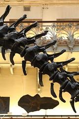 Allosaurus fragilis (just.Luc) Tags: skelet skeleton squelette dinosaur dinosaure dinosaurus parijs parigi paris îledefrance france frankrijk frankreich francia frança museum museo musée museet museu europa europe