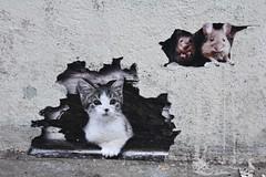 Billboard Hacker_1074 rue Buot Paris 13 (meuh1246) Tags: streetart paris animaux billboardhacker ruebuot paris13 chat souris butteauxcailles bh