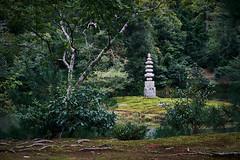 Jardin en Kioto (diocrio) Tags: japón kioto kinkakuji jardín