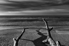 The Baltic Sea. Seashore washed out trees. (Jan 11, 2020) (ms.gulbis) Tags: long exposure nd filter balticsea beach branch blackandwhite black white water sea seashore seascape seaside clouds sky winter