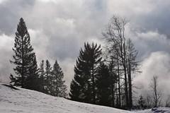 Toggenburg (Bergwandern Alpen) Tags: obertoggenburg nebel fog mist winter schnee snow düster gloomy wolken clouds baum tree