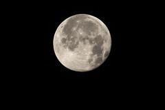 Full Moon011120 (Jeff Bohner Photography) Tags: moon wolf 2020 yucaipa d800 nikon 70200mm tc20eiiiteleconverter california sanbernardino inlandempire jeffbohner