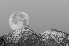 Full Moon011120c (Jeff Bohner Photography) Tags: moon wolf 2020 yucaipa d800 nikon 70200mm tc20eiiiteleconverter california sanbernardino inlandempire jeffbohner