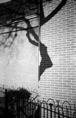 Half A Tree (selyfriday) Tags: holland film netherlands dutch 35mm nederland hc110 ilford 400iso kentmere filmisnotdead olympusxa1 kentmere400 believeinfilm