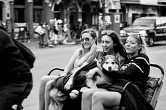 Lap Dog (RADfotoX) Tags: lap dog pedicap bike bicycle people women girls downtown city center travel monochrome black white spicollective spianimals austin texas sixth street blackwhite keepaustinweird