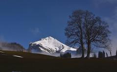 Wildhuser Schafberg (Toggenburg) (Bergwandern Alpen) Tags: alpen alps berg mountain baum tree obertoggenburg toggenburg wildhuserschafberg nebel fog mist