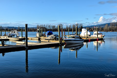 Pitt Meadows Marina/ Pitt River/ South Arm Alouette River (SonjaPetersonPh♡tography) Tags: pittmeadows marina pittmeadowsmarina pittriver southarmalouetteriver britishcolumbia canada bc alouetteriverdykestrail reflections waterscape waterreflections river docks view viewpoint landscape boats moorage serene calm water riverfront floatingdocks scenic scenery