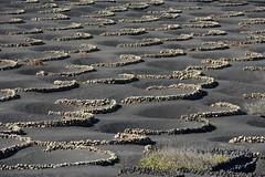 La Geria, Lanzarote, Islas_Canarias, Spain, Nikon_D810, January_2020_707 (tango-) Tags: lanzarote islascanarias canarie canaryislands 加那利群島 جزرالكناري kanarischeinseln