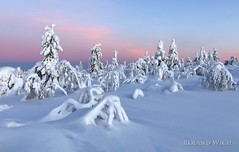 Lapland (Rolandito.) Tags: europe europa finnland finland suomi lappland lapland winter luosto sbow wonderland powder snow tree trees covered hike