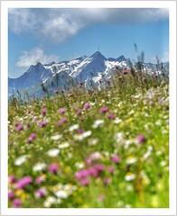 @firlie: es geht auch farbenfroher 😁 (Norbert Kaiser) Tags: schweiz switzerland alpen alps alpstein appenzelleralpen aussicht hoherkasten säntis gebirge berge landschaft landscape