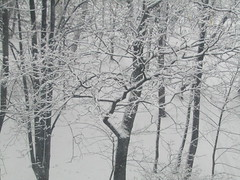 snowfall at last (VERUSHKA4) Tags: city winter snow tree nature canon europe branch view russia moscow hiver january neve trunk snowfall vue ville bough yard season white snowy blanc landscape land