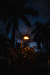 Evening Light - Sanibel/Captiva Island, Florida (Chad Baxter) Tags: florida captiva gulf mexico ocean island warm tropic green palm trees hot vacation swimming water sand nikon d850 2485mm 35g retro sanibel wildlife seagulls fish beach
