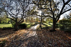 Sunlit Miller Park in Preston (Tony Worrall) Tags: welovethenorth nw northwest north update place location uk visit area attraction open stream tour photohour photooftheday pics country item greatbritain britain british gb capture buy stock sell sale outside dailyphoto outdoors caught photo shoot shot picture captured ilobsterit instragram england photosofpreston preston lancs lancashire city park nature new fresh outdoor fun green trees sunlit sun leaves tree