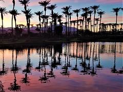 Palm twilight Winter sky (moonjazz) Tags: trees palm reflection lake sky patterns pink blue photography nature landscape california palmsprings twilight harmony peace glow upsidedown retirement moonjazz flckr best photos favorite panorama light