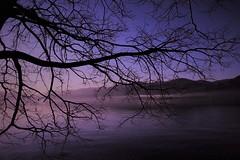 Noi vagabondi, sempre alla ricerca della via più solitaria, non iniziamo un giorno senza averne terminato un altro, e nessuna alba ci trova dove il tramonto ci ha lasciato. (K. Gibran) (ornella sartore) Tags: inverno tramonto lago natura albero rami montagna colori allaperto canon