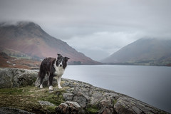 2/52  Apparently Britain's favourite view (JJFET) Tags: 2 52 weeks for dogs paddy 2020 border collie sheepdog dog