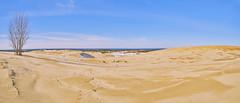 025443  A Place Made For Panoramas (David G. Hoffman) Tags: panorama lake lakeshore lakemichigan dunes tree