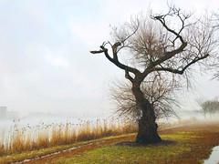 (TeeB83) Tags: tree baum fog nebel apple smartphone iphone appleiphonex