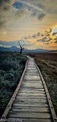 Morning Walk (lorinleecary) Tags: marinaboardwalk path sunrise clouds morrobaystatepark morrobay