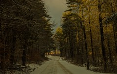 Winter Path (SueZinVT) Tags: snow woods roads vermont trees snowy sky landscape