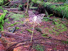 Is it a butterfly or is it a fairy? (walneylad) Tags: butterfly fairy capilanoriverregionalpark park parkland urbanpark woods woodland forest rainforest urbanforest trees log wood moss branches nature scenery january winter brown green northvancouver britishcolumbia canada