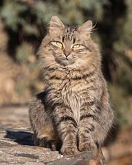 felino (Eugercios) Tags: gato cat chat patones madrid comunidaddemadrid espanha espagne spain españa felino animal