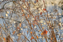 Tangle (tonguedevil) Tags: outdoor outside countryside nature winter pond bokeh plants leaves colour light sunlight