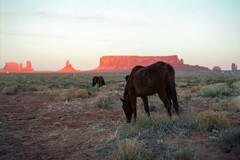 Wild & Free (Boris Capman) Tags: pentax67 6x7 monumentvalley arizona utah national parks landscape scenery outdoor outside nature travel horses wildlife animals usa kodak ektar100 mediumformat 120film