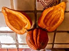 What Big Ears You Have, Mister Pumpkin! (Chic Bee) Tags: traderjoes piepumpkins comfortfood orange cut food cooking baking familyrecipe momsrecipes myrecipes vegetarian vegan kitchencounter preparation misterpumpkin triangle triangular lookslikeafoxhead fox