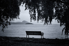 Lake Wanaka (hotpotato70) Tags: southisland newzealand canon 90d december lightroom monochrome blackwhite silverefexpro2 bench wanaka water lake island trees rain flooding