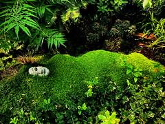 Gaia: Sleeping Mother Earth (Temperate Pyramid ) (peggyhr) Tags: peggyhr green gaia lush face muttartconservatory edmonton alberta canada thetemperatepyramid super~sixbronze☆stage1☆ rainbowofnaturelevel1red infinitexposurel1 carolinasfarmfriends thelooklevel1red 50faves