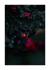 This work is 7/21 works taken on 2019/12/8 (shin ikegami) Tags: sony ilce7m2 a7ii sonycamera 50mm lomography lomoartlens newjupiter3 tokyo 単焦点 iso800 ndfilter light shadow 自然 nature naturephotography 玉ボケ bokeh depthoffield art artphotography japan earth asia portrait portraitphotography