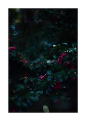 This work is 9/21 works taken on 2019/12/8 (shin ikegami) Tags: sony ilce7m2 a7ii sonycamera 50mm lomography lomoartlens newjupiter3 tokyo 単焦点 iso800 ndfilter light shadow 自然 nature naturephotography 玉ボケ bokeh depthoffield art artphotography japan earth asia portrait portraitphotography