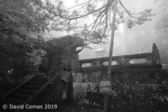 Nikkō - Shrines and Temples of Nikkō (CATDvd) Tags: nikond7500 日本国 日本 stateofjapan nippon niponkoku nihonkoku nihon japón japó japan estatdeljapó estadodeljapón catdvd davidcomas httpwwwdavidcomasnet httpwwwflickrcomphotoscatdvd july2019 architecture arquitectura building edificio edifici temple templo kantōregion kantōchihō regiódekantō regióndekantō 関東地方 nikkō nikkōshi 日光市 prefecturadetochigi tochigiprefecture tochigiken 栃木県 santuariosytemplosdenikkō santuarisitemplesdenikkō shrinesandtemplesofnikkō ngc